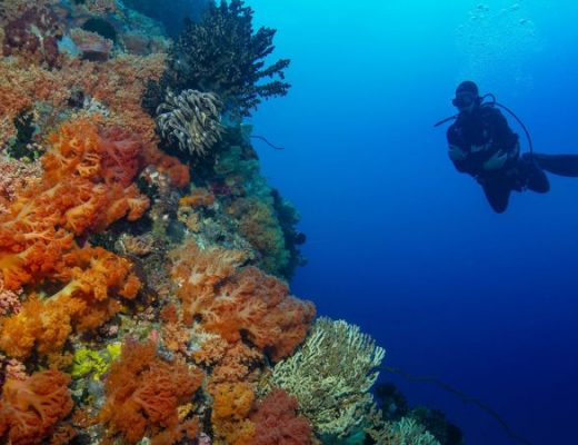 Top 5 Diving Sites In Singapore